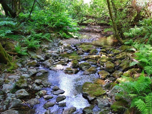 Al's Photography Blog: Muir Woods Stream